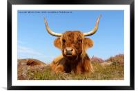 Highland Cows, Framed Mounted Print