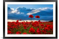 Sea of Poppies , Framed Mounted Print