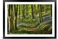 Bluebells and Beech, Framed Mounted Print