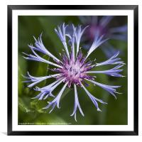Blue Dreams Stylized, Framed Mounted Print