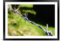 Barbed Wire, Framed Mounted Print