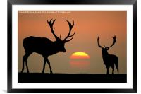 Sunset Stags, Framed Mounted Print