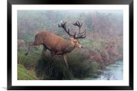 Crossing the stream, Framed Mounted Print