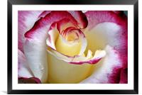 Double Delight, Framed Mounted Print