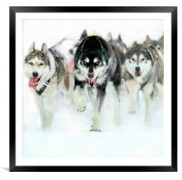 The leader of the pack, Framed Mounted Print
