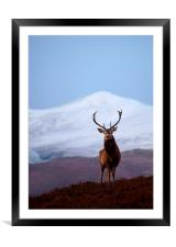 Winter stag portrait, Framed Mounted Print