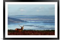 Stag Overlooking the Beauly Firth and Inverness, Framed Mounted Print