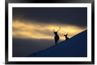 Winter Stags Silhouette, Framed Mounted Print