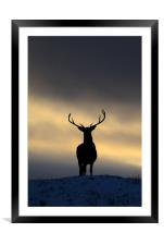 Stag Silhouette , Framed Mounted Print
