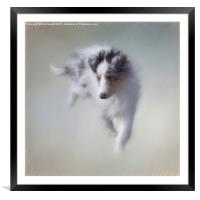 Puppy Power, Framed Mounted Print