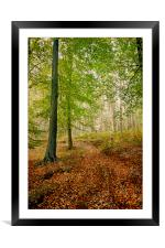 Autumn Path, Framed Mounted Print