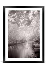 Sunshine Canopy, Framed Mounted Print