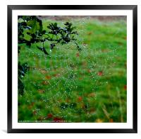 PEARL DROPS ON THE WEB, Framed Mounted Print
