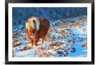 Ginger Pony in the Snow, Framed Mounted Print