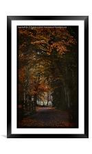 Scottish Woodland, Framed Mounted Print