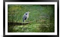 The Heron, Framed Mounted Print