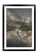 Lone Tree Reflection, Framed Mounted Print