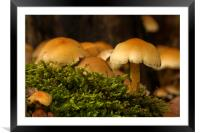 Fungi In The Woodland, Framed Mounted Print