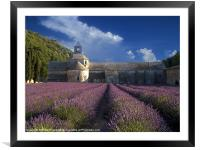 Lavender Fields in France, Framed Mounted Print