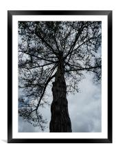 Lone Tree, Framed Mounted Print