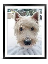Our Westie, Framed Mounted Print