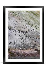 The Snares, Framed Mounted Print