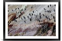The Snares , Framed Mounted Print