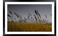 Humber through the reeds, Framed Mounted Print