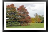 Autumn Trees, Framed Mounted Print