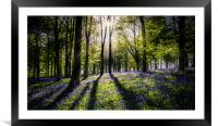 Magic Wood, Framed Mounted Print