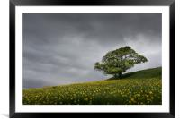Lone tree on the Kent downs. , Framed Mounted Print
