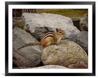 Chip On The Old Rock, Framed Mounted Print
