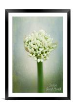 Onion Seed Head, Framed Mounted Print
