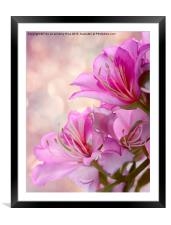 Pink Delight 2, Framed Mounted Print
