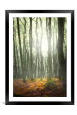 Autumn Trees in mist., Framed Mounted Print