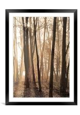 Making shadows though the tree's, Framed Mounted Print