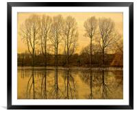 Trees reflection across the lake                 , Framed Mounted Print