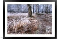 Forest frost, Framed Mounted Print
