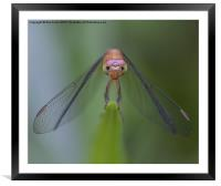 I see you!, Framed Mounted Print