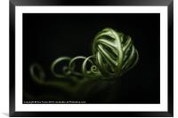 Fern Tendrils, Framed Mounted Print
