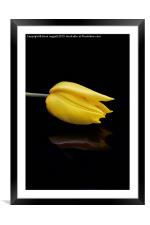 Yellow and Black, Framed Mounted Print