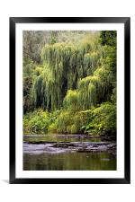 Weeping Willow, Framed Mounted Print