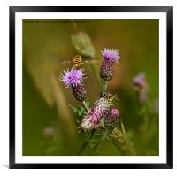 Just buzzin' about, Framed Mounted Print