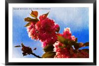 Pretty in pink, Framed Mounted Print