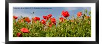 Pretty Poppy Panorama, Framed Mounted Print