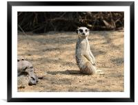 Simples!, Framed Mounted Print