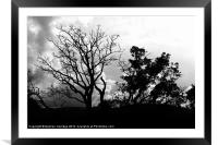 Black and white tree silhouette, Framed Mounted Print