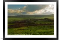Cattle in a field at Gwithian, Cornwall, Framed Mounted Print