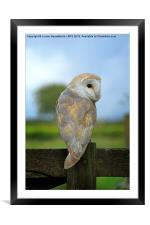 Barn Owl on a Fence, Framed Mounted Print