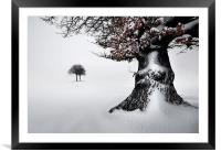 Oak in the snow, Framed Mounted Print